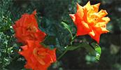 Изображение к статье - Цвет в ландшафтном дизайне
