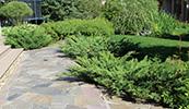 Изображение к статье - Декоративные группы из хвойных растений