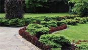 Изображение к статье - Хвойные в ландшафтном дизайне и озеленении