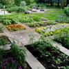 Фото декоративных огородов