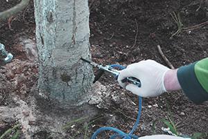 Уколы деревьям от хермеса