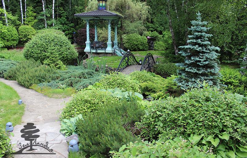 Хвойные декоративные растения в ландшафтном дизайне