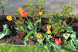 Весной весенняя подкормка сада