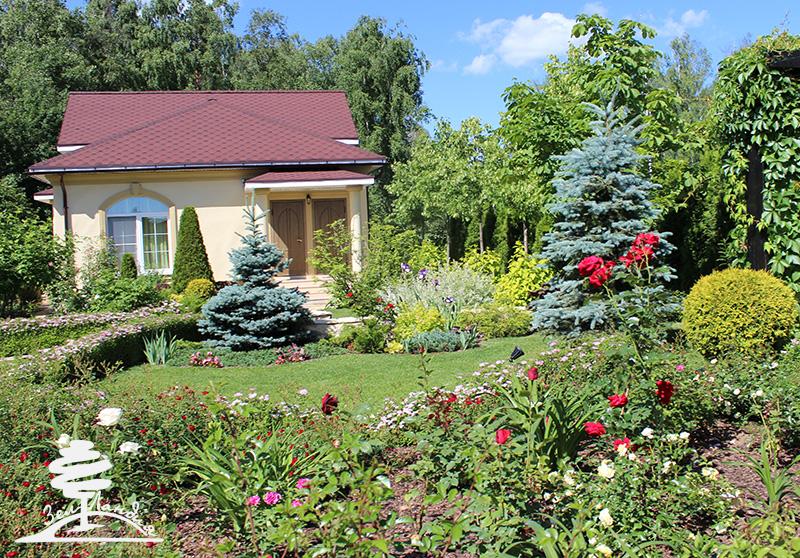 Розы и хвойники в ландшафтном дизайне