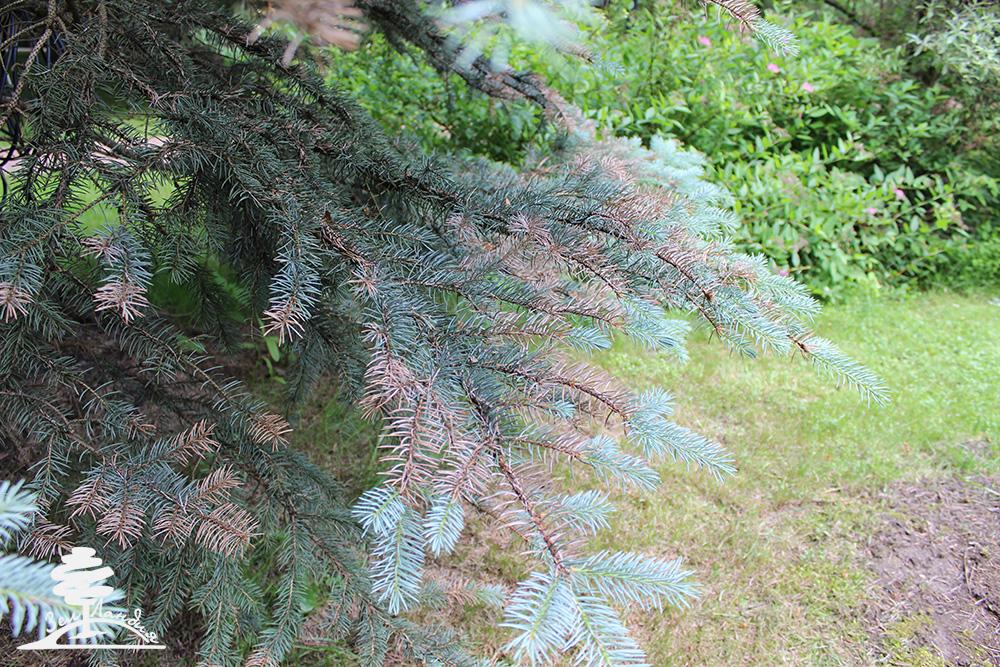 Болезни и вредители деревьев